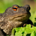 Profile picture of Mr. Toad